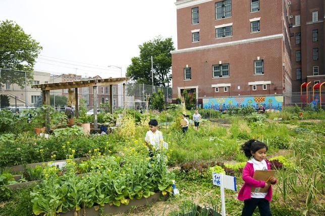 Edible Schoolyard